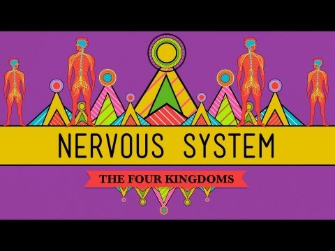 The Nervous System - CrashCourse Biology #26