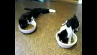 Коты после наркозА )