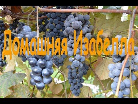 Вино из десертного винограда в домашних условиях