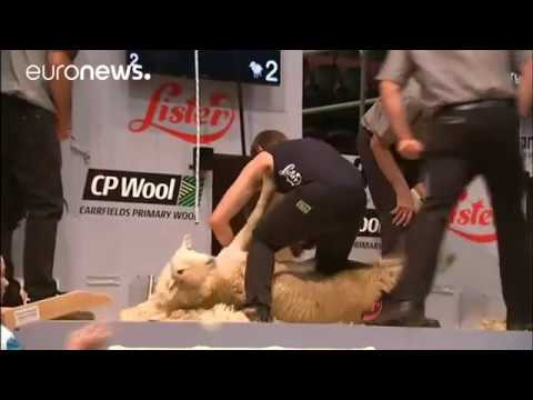 Sheep shearers from across the globe battle in New Zealand c