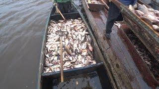 Лодка ломится от рыбы Сазан Лещ Карась