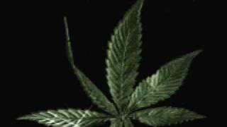Larry Hernandez Piloto Cannabis