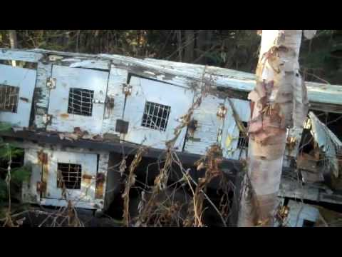 Neglected Sled Dogs Rescued