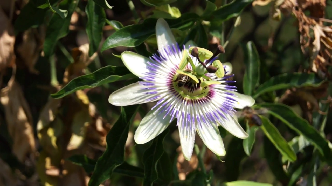 пчелы на цветке фото