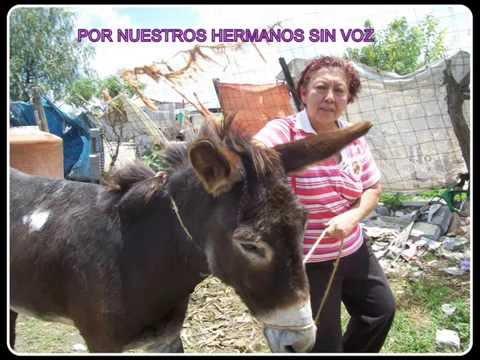 EL ANTES Y EL AHORA DE POR NUESTROS HERMANOS SIN VOZ