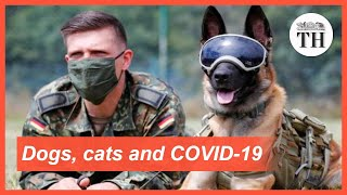 Cats, dogs and COVID-19
