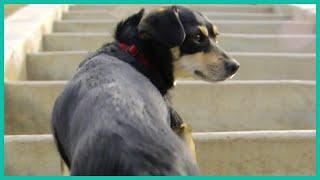 Teaching A Dog To Climb Stairs | Lucky Dog