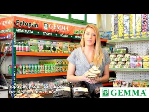 Καλλιέργεια μανιταριών pleurotus στο σπίτι (Gemma)