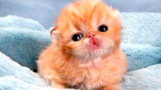 Очень Смешные Маленькие Животные! Видео Сборник  [NEW]