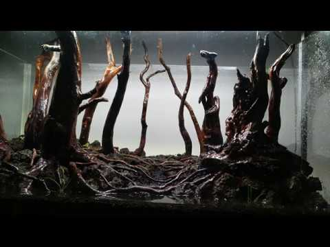 Forest Aquascape - Nature aquarium - Day 1 DSM - YouTube