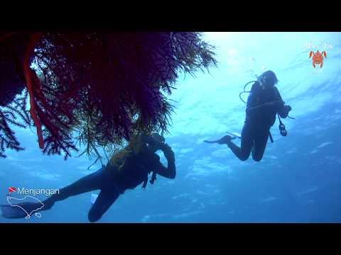 """Diving """"Post II"""" in Menjangan Island, Bali"""