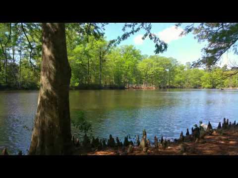 Swan Lakes Iris Gardens Sumter SC