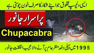 Chupacabra In Real Life - Amazing Animal - Purisrar Dunya Urdu Documentaries