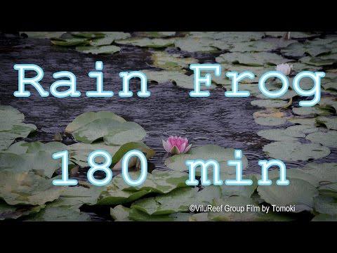 Rain & Frog Relaxing Sleep Nature Sounds