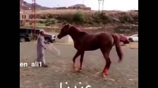 Лошади,мир животных,BBC