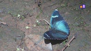 Kenya - Kakamega Rain Forest
