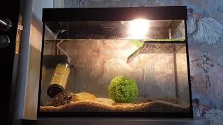 Кормление красноухой и болотной черепахи креветками #черепахазахи