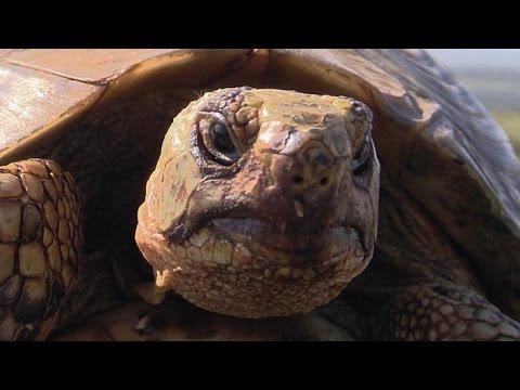 Die Schildkröte und der Charme des Alters