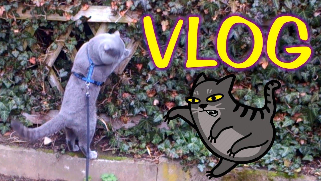 Boss Cat VLOG Hard Jump