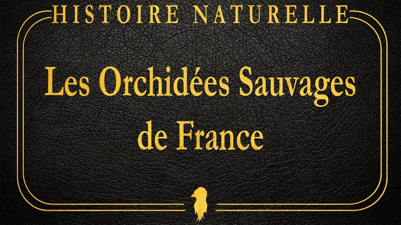 les orchid es sauvages de france histoire naturelle 1 youtube. Black Bedroom Furniture Sets. Home Design Ideas