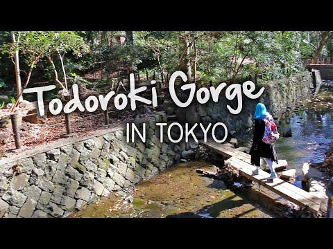 BEAUTIFUL Ravine In Tokyo?! Todoroki Gorge