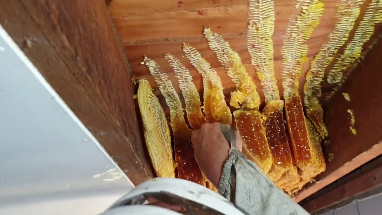 beekeepers extract hive that
