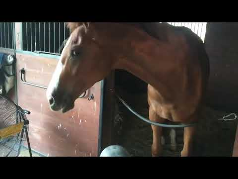 Joey Brooks - Horse Has Some Fun With A Leaf Blower