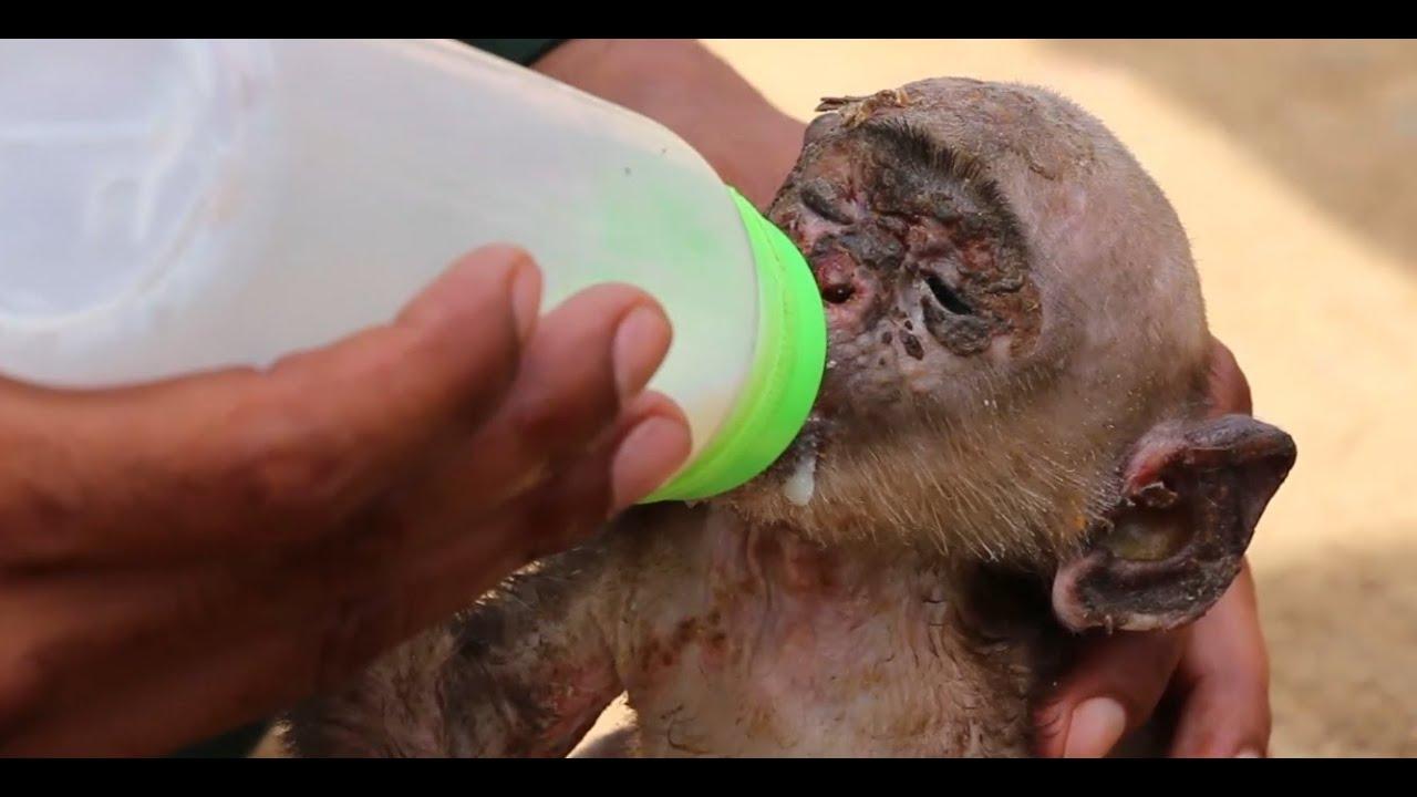 Good People Rescues Baby Monkey | Real Life Hero Boy Help to Poor Baby monkey | Full Video 2016