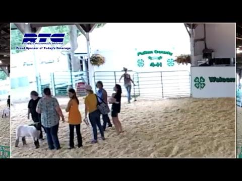 Fulton County 4-H Sheep Show
