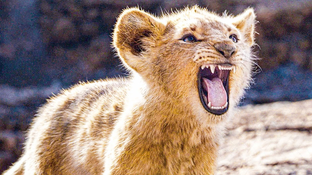Baby Simba Tries To Roar Scene The Lion King 2019 Movie Clip Youtube