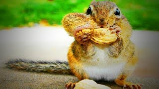 Funny Squirrels 😂😍 Cute Squirrels Playing (Full) [Funny Pets]