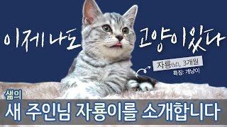 [샒의삶] 나도 이제 고양이 있다!!! 샒의 고양이 자룡이를 소개합니다!