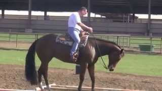 Sneakin Into Heaven  Deluxe All Around horse for sale 2008 gelding