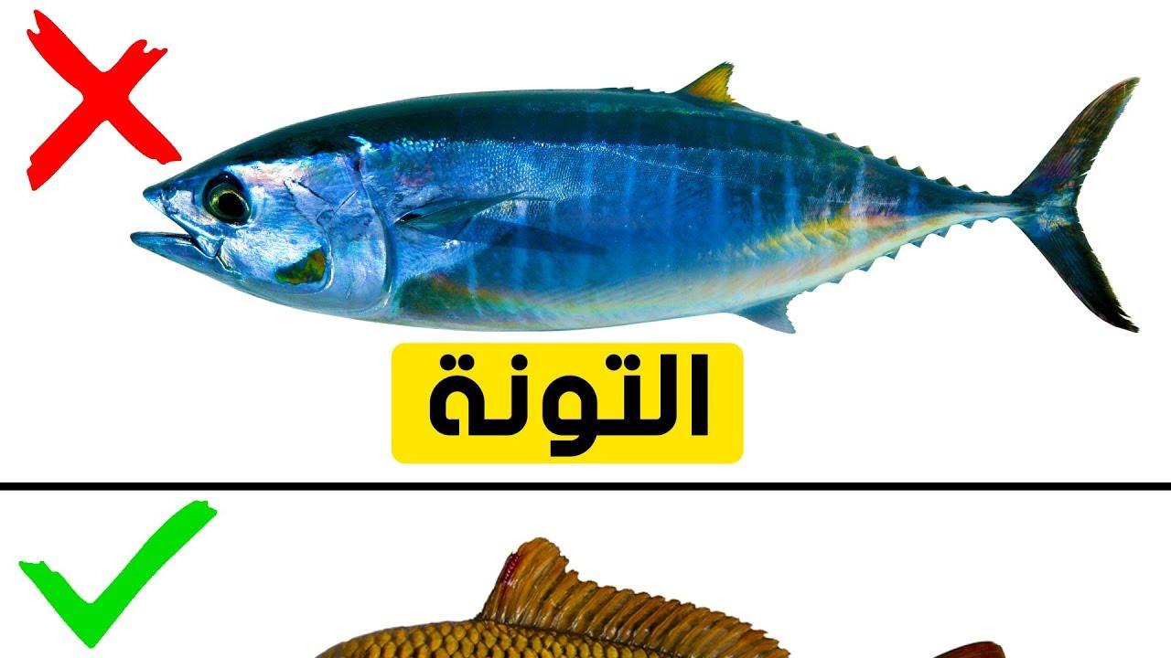 تسعة أنواع من السمك يجب أل ا تأكلها مطلق ا Youtube