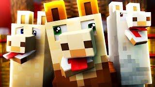Wenn alle Minecraft Spieler Alpakas wären..