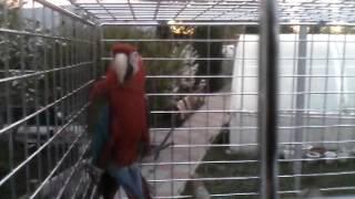Большой попугай неизвестной породы