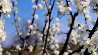 Spring Flowers - André Rieu  - Waltz Medley