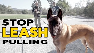 Train Your Dog NOT to PULL on the Leash