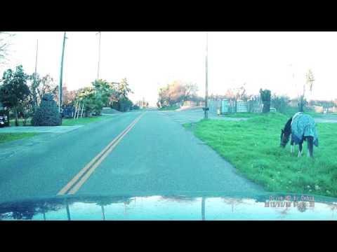 Horses: Cobra Model CDR 825E Dashcam