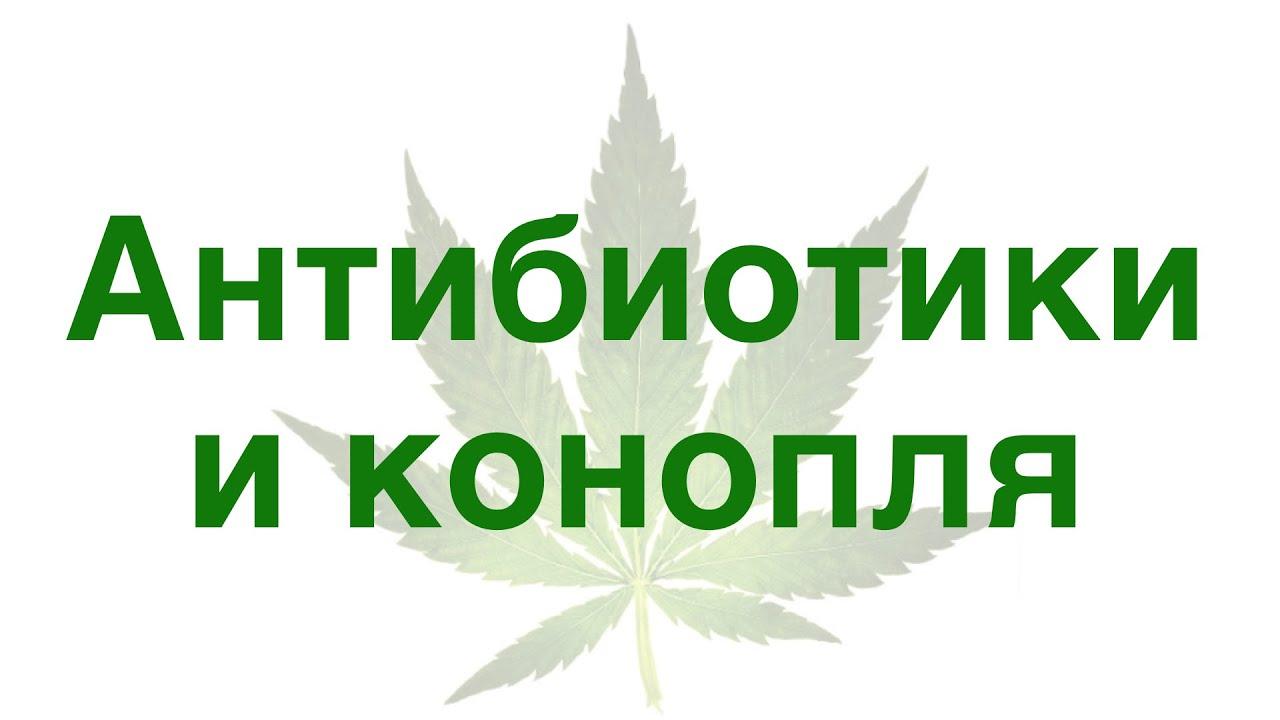 Антибиотики с коноплей разрешено ли курить марихуану на ямайке