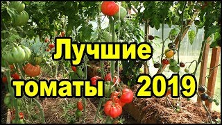 Лучшие сорта томатов 2019. Самые вкусные помидоры.