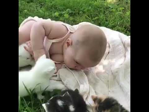 Kittens playing with baby