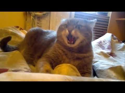Злые коты вторая подборка
