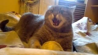 Download Злые коты вторая подборка Mp3 and Videos