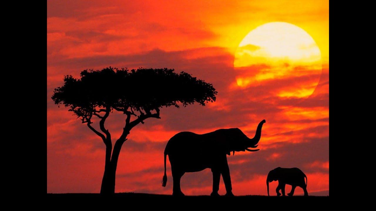 kenyas biodiversity Kenya's biodiversity - threats.