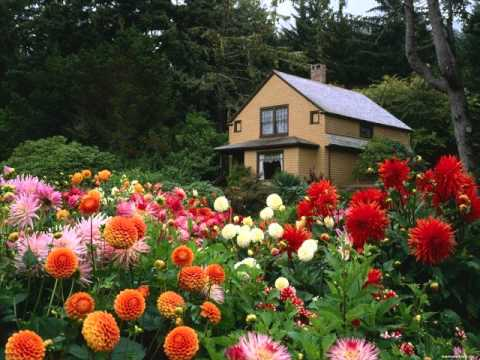 flowers garden, beautiful flower,nice flower, Beautiful flower