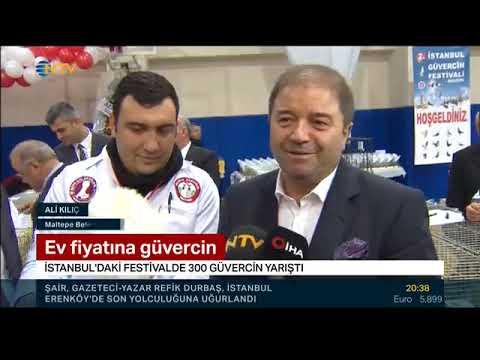 Ntv : 2.İstanbul Güvercin Festivali