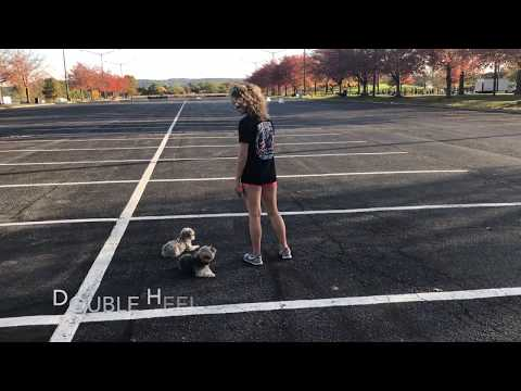 4 Year Old Morkie, Penelope     Lehigh Valley Dog Trainers: Off Leash K9 Training