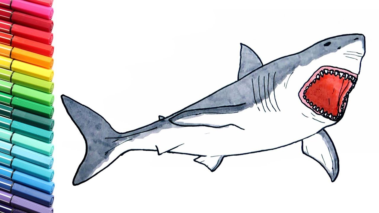 Shark Drawing and Coloring Pages for Children Megalodon Dinosaur