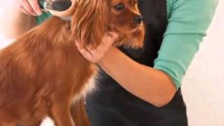 Dog & Cat Grooming - The Dog Cabin Grooming Salon